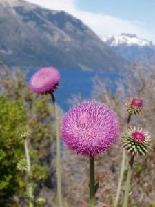 paisaje-de-montanas-y-primer-plano-de-flores-de-cardos